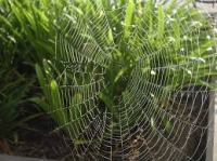 Spiderweb 102714