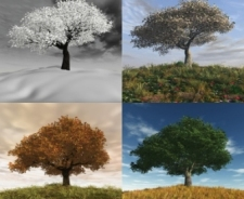 Tree in four seasons 122214